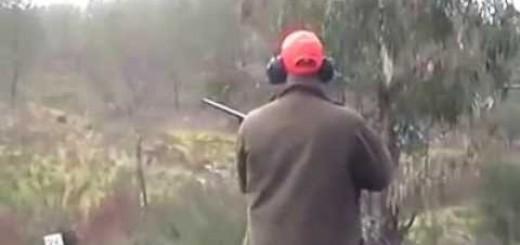 Avcı domuzu beklerken domuz aniden avcıya saldırıyor