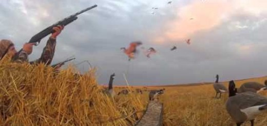 North Dakota goose hunting with hang loose outdoors