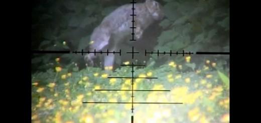 Ağır Çekim Tavşan Avı