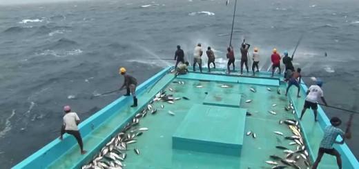 İlginç Balık Yakalama