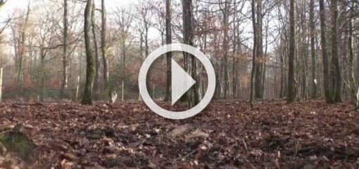 best-wild-boar-shots-en-yi-domuz-avlar-720x340