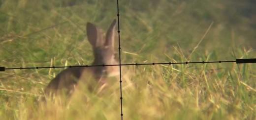Dürbünlü Silah İle Tavşan Avı(Rabbit Hunting)