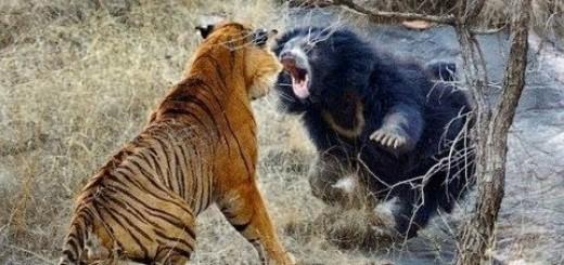 En Büyük Hayvan Dövüşleri-Biggest wild animal fights