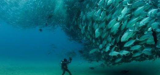 Müthiş Balık Sürüsü-Huge Swarm of Jack Fish Dwarf Scuba Diver