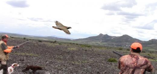 Sülün ve Keklik Avı Partridge Hunt