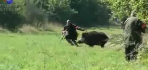 Domuz Avcıya Saldırıyor-Wild Boar Attack