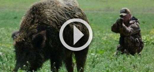 hunting-giant-wild-boar-in-hungary-720x340
