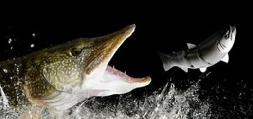 Top 10 Pike Attacks-Turna Balığı Saldırıları