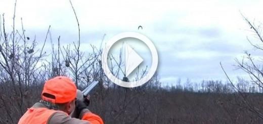 ulluk-av-quail-hunting-720x340
