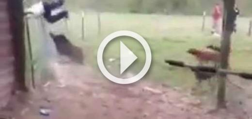 wild-boar-attacks-man-720x340