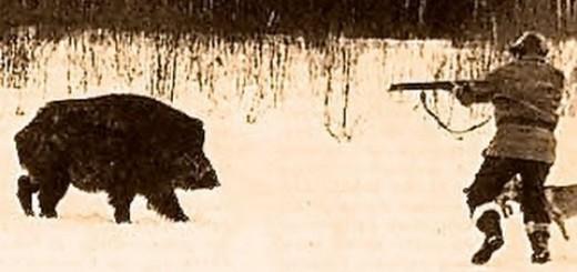 Domuz Saldırısı-Wild Boar Attack To Hunter