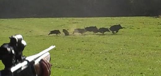 Top Wild Boar HUnts-En İYi Domuz Avları