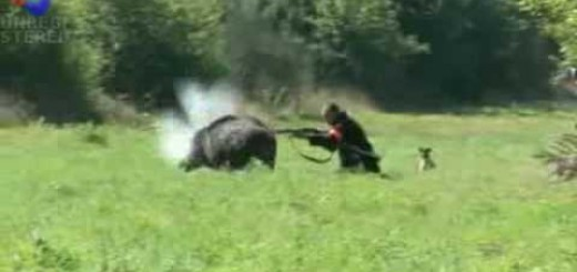 Wild Boar Attack-Domuz Saldırısı