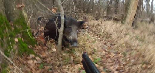 Wild Boar Hunting-Domuz AVı İzle