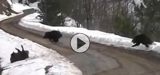wild-boar-hunting-slow-in-turkey-720x340