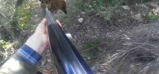 Domuzla Karşı Karşıya Kalan Avcı Faced against our hunters do