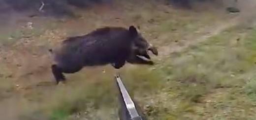Domuz Avı TÜrkiye-Wild Boar Hunting Turkey