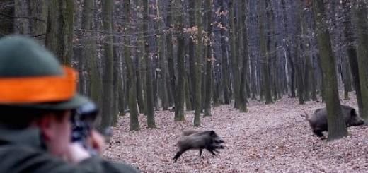 Best of Wild Boar Hunting