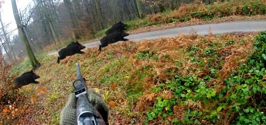 Caccia al cinghiale in Ungheria – Chasse sanglier in Ungherie Battue Battuta Wild boar Hunting