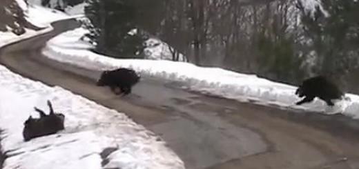 snow boar hunt hó vaddisznó vadászat Schneewildschweinjagd