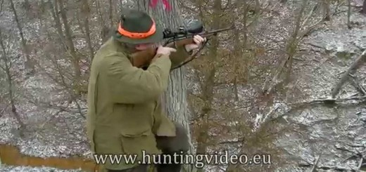 Driven Villisika Hunt Unkarissa    (Driven Wild Boar Hunt In Hungary)