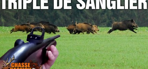 Triplé de sangliers boar hunt  villisikametsällä