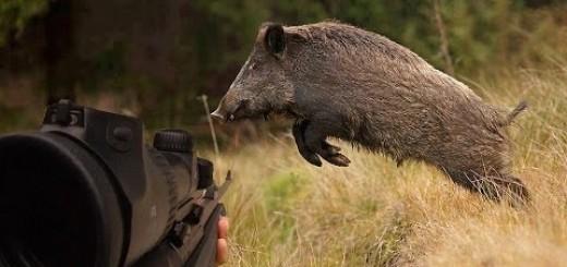 villisika metsästys   vildsvin jagt   Wildschweinjagd