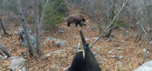 Wild boar hunt (vildsvin jagt) villisika metsästys    Wildschweinjagd