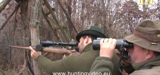 Wild Boar Hunting In Hungary   galtjakt  глиган лов  villisikametsällä