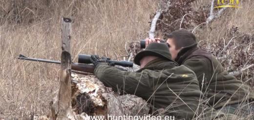 Wild Boar, Red Deer, Mouflon Hunting In Hungary Bükkszenterzsébet