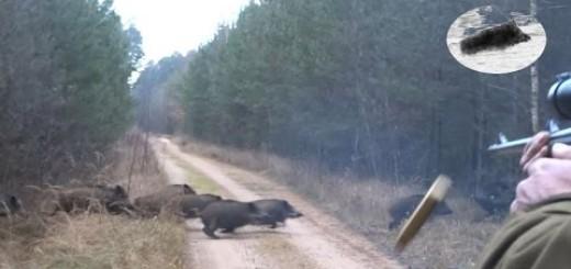 Drückjagd in Polen – polowanie na dziki- vildsvinsjakt – driven hunt Chasse Au Sanglier drivjakt   Wild Boar hunting best moments compilation Polowanie najlepsze momenty Drückjagd Wildschweinjagd