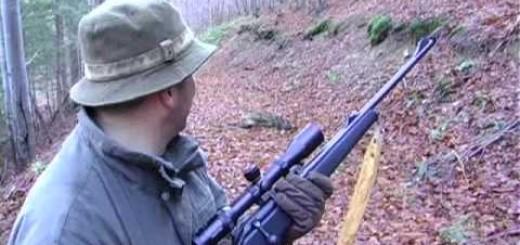 Wildschwein Herde Vaddisznó állomány Vildsvin besättning Villisika lauma Wild boar herd