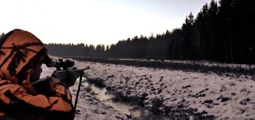 Chasse en battue. Les meilleurs moments de la chasse. Bielorussie. Chasse sanglier