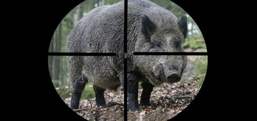 лучшие моменты Chasse Au Sanglier drivjakt Wild Boar hunting best moments compilation Polowanie najlepsze momenty Drückjagd Wildschweinjagd