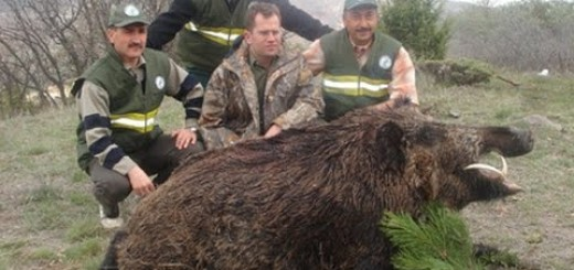 Domuz Avı 2016-Wild Boar 2016