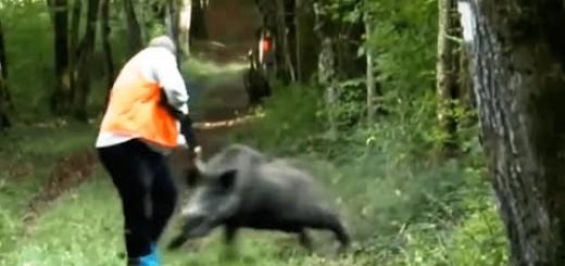 Worst Wild Boar Attacks-En Kötü Domuz Saldırıları