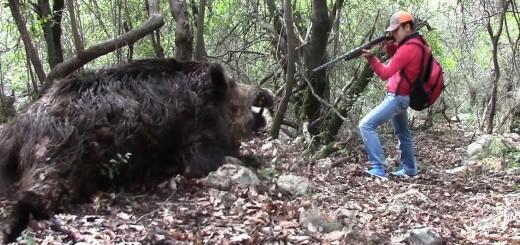 Domuz Avı-Big Wild Boar Hunting