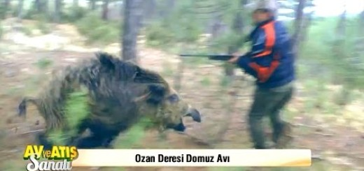 Wİld Boar Attacks To Hunter