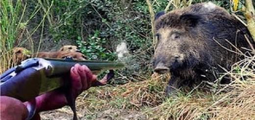 Wild Boar Hunting 2016